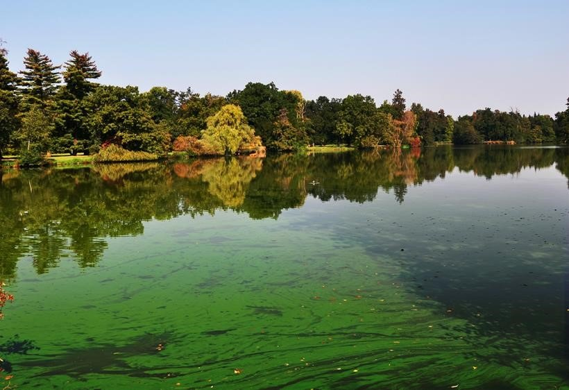 Blue green algae – a risk this summer