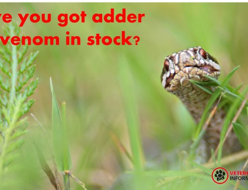 Adder antivenom