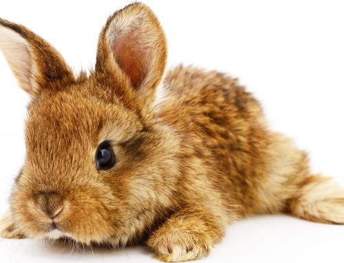 Rabbit Awareness Week- June 2020
