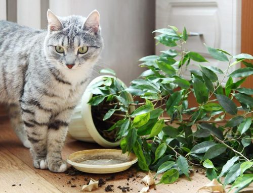 Indoor companion animal poisoning by plants in Europe