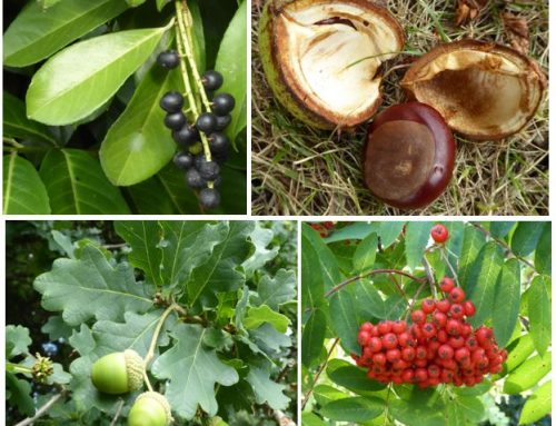Autumn fruits and poisoning