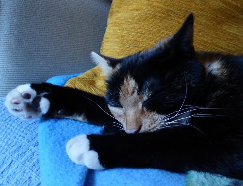 International Cat Day – 8th August 2021